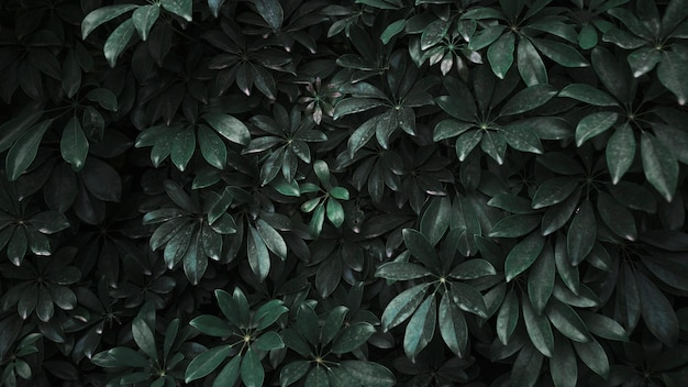 Fourré de plante sombre