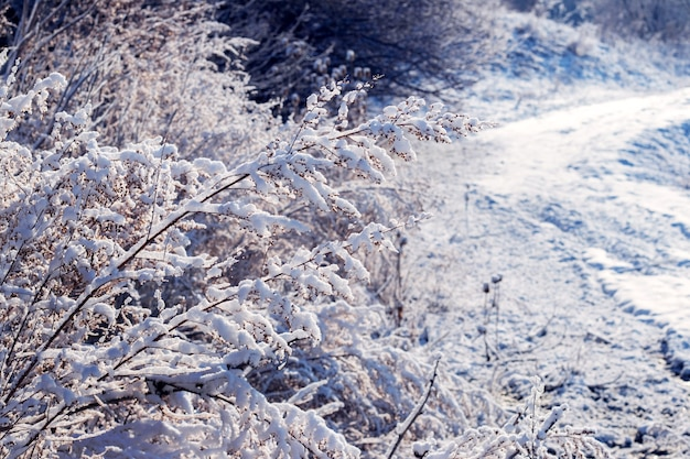 Des fourrés denses d'arbres et de buissons couverts de neige en hiver par une journée ensoleillée