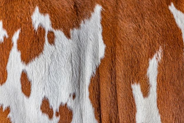 Fourrure de bétail zébu élite
