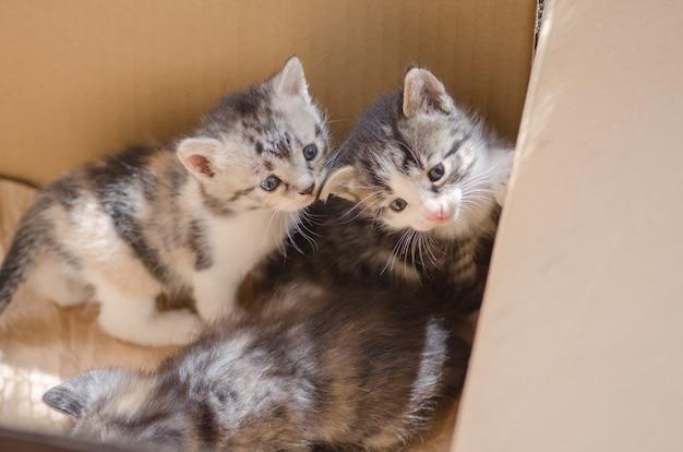 Fourrure, chaton, dans, carton
