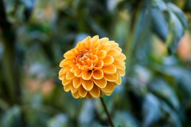 Foyer peu profond de fleur jaune pendant la journée