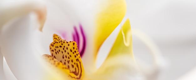 Fragment de fleur d'orchidée blanche phalaenopsis fond floral macro