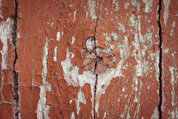 Fragment d'une texture en bois