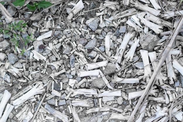Les fragments d'os de poulet ont été laissés.