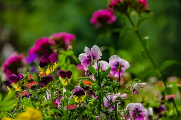 Fraîches belles fleurs dans le jardin