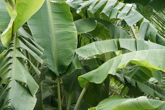 Frais détail croissance plante sain fond gros plan environnement feuillage feuille