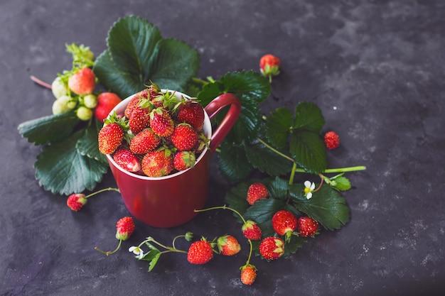 Fraises fraîches dans une tasse bordeaux sur fond sombre baies de récolte d'été et superaliments
