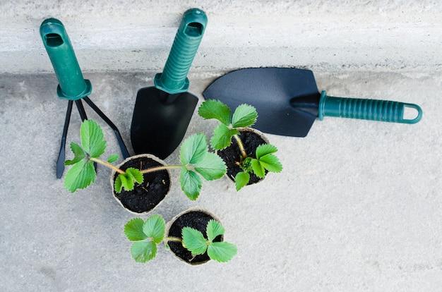 Fraises avec des outils de jardinage.