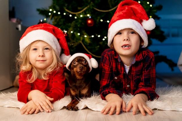 Frère, soeur et petit chien se trouvent sous le sapin de noël avec des chapeaux de père noël et sourient. petite fille et garçon.