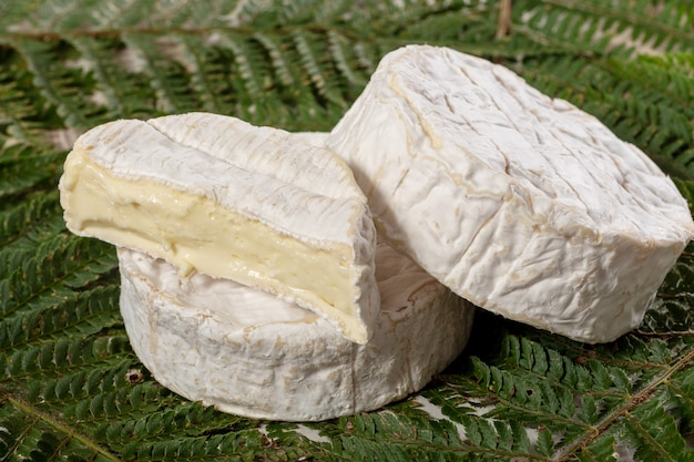 Fromage camembert traditionnel normand français, produit laitier