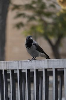 Un fron voir oiseau sur clôture métallique avec des arbres verts