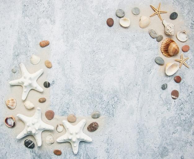 Frontière de coquillages et étoiles de mer