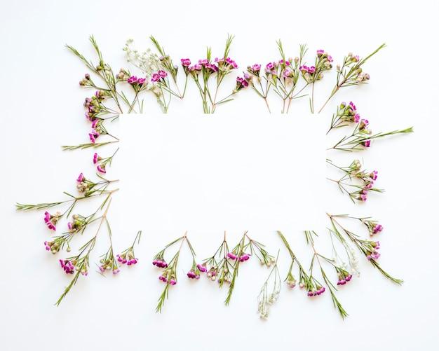 Frontière de fleurs de champ