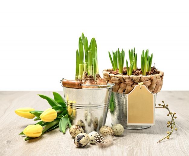 Frontière de pâques avec pots de fleurs, oeufs de caille et tulipes jaunes, espace de texte
