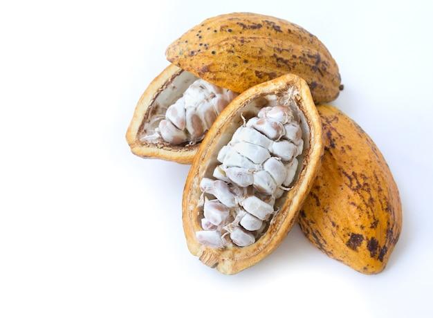 Fruit de cacao isolé sur fond blanc.