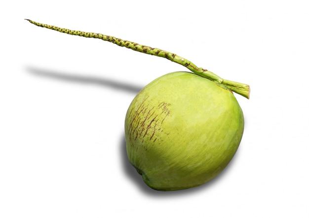 Fruit de noix de coco isolé