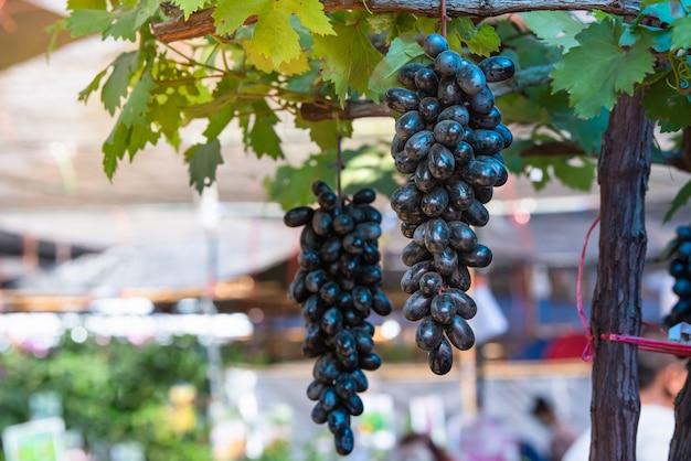 Fruit de raisin noir suspendu à un arbre