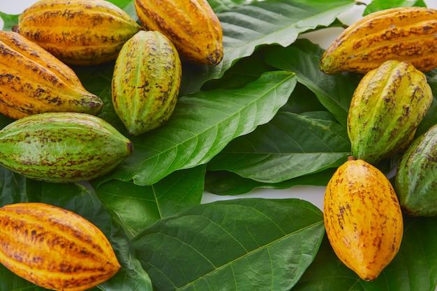 Fruits de cacao frais avec une feuille verte sur fond blanc