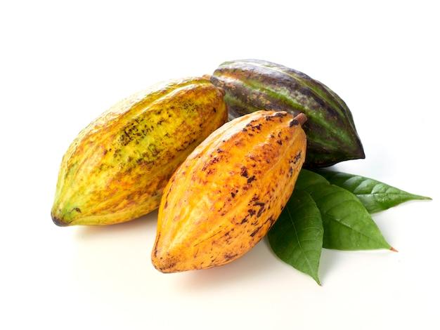 Fruits de cacao frais avec feuille verte