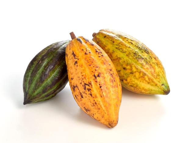 Fruits de cacao frais