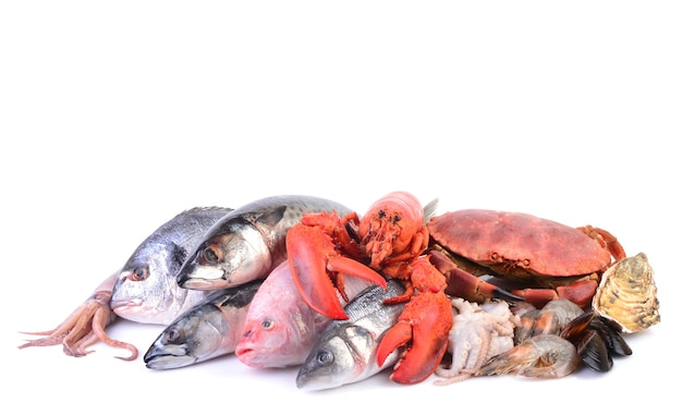 Fruits de mer sur fond blanc