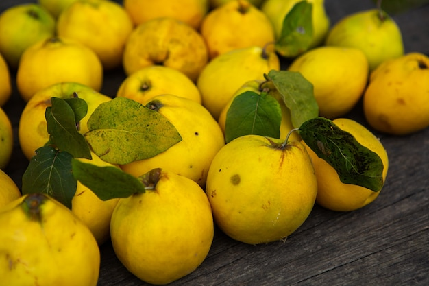Fruits mûrs de coing jaune doré isolés sur fond de bois