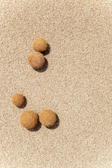 Fruits de posidonia oceanica sur une plage méditerranéenne