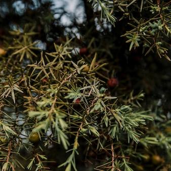 Fruits qui poussent sur un arbre vert luxuriant