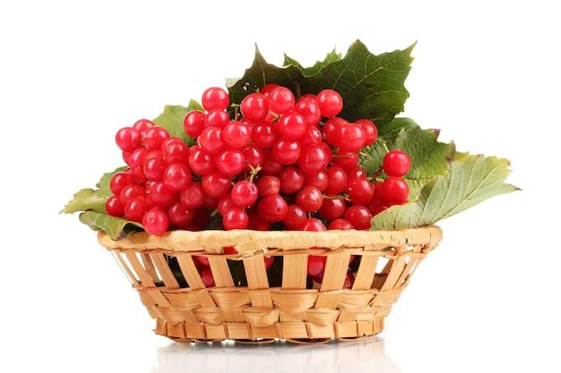 Fruits rouges de viorne dans le panier isolé sur blanc