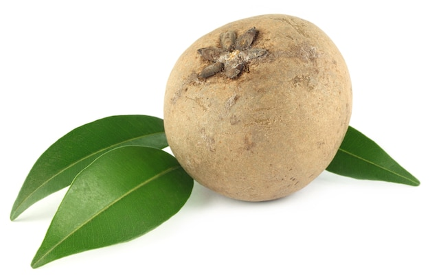 Fruits de sapotille ou de sapota avec des feuilles vertes