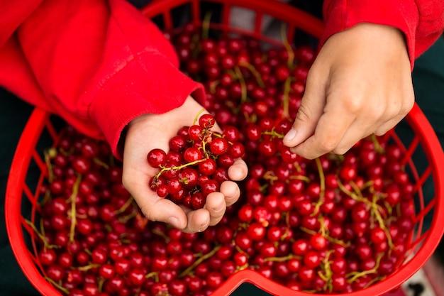 Fruits savoureux dans les mains des enfants