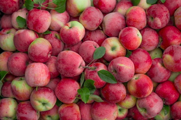Fruits texture