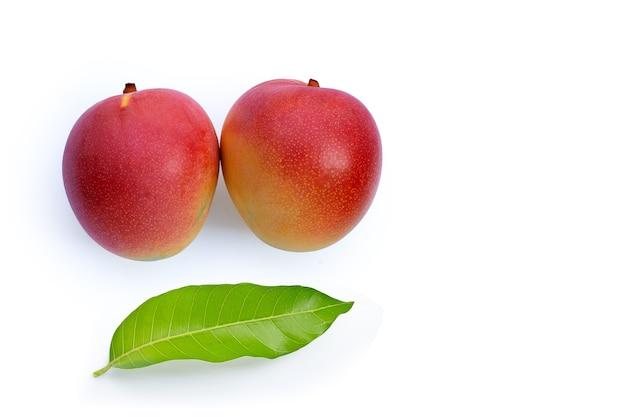 Fruits tropicaux, mangue avec feuilles sur mur blanc.