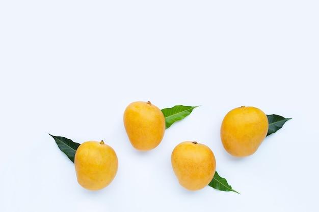 Fruits tropicaux, mangue sur fond blanc. vue de dessus