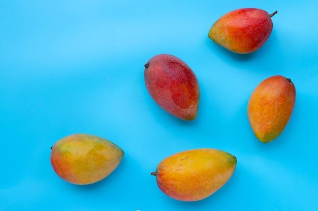 Fruits tropicaux, mangue sur fond bleu. vue de dessus
