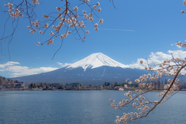 Fuji sakura japon