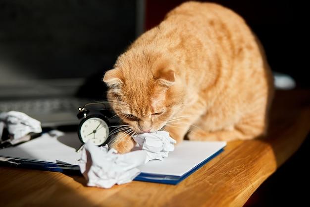 Funny cat playfull jouant avec des boules de papier froissé sur le bureau au soleil, lieu de travail à domicile.