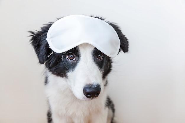 Funny cute smiling puppy dog border collie avec masque pour les yeux endormi isolé
