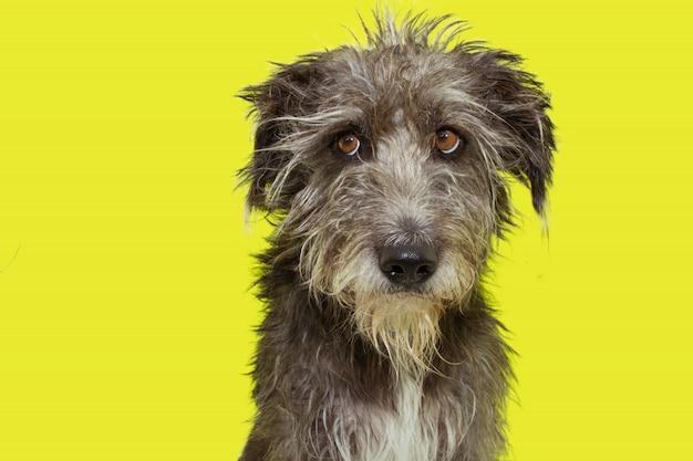 Funny dog furry échevelé isolé