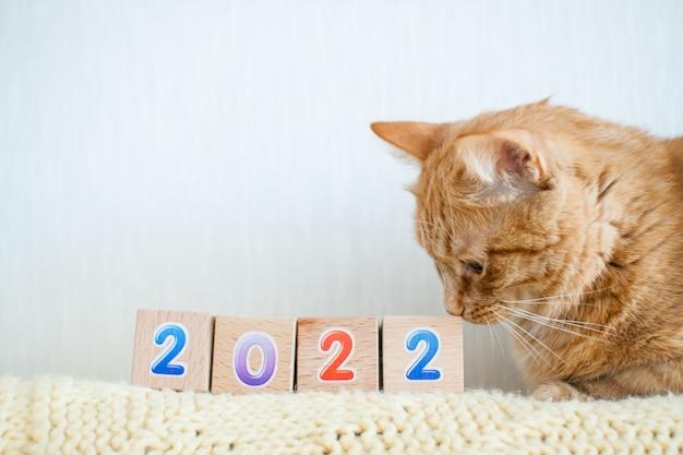 Funny gros chat gingembre étudie des cubes avec des nombres 2022