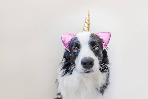 Funny kawaii portrait puppy dog border collie avec corne de licorne isolé