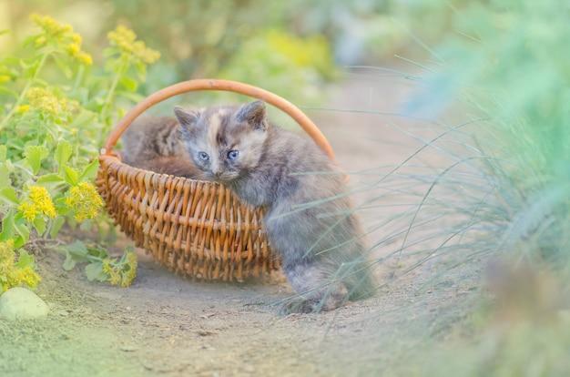 Furry chaton dans le panier en osier dans le jardin.