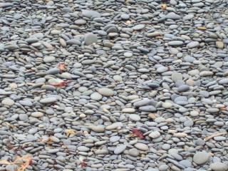 Galets de granit - échoués et triées