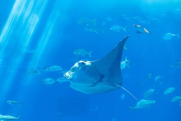 Une galuchat derrière la vitre avec la vie marine