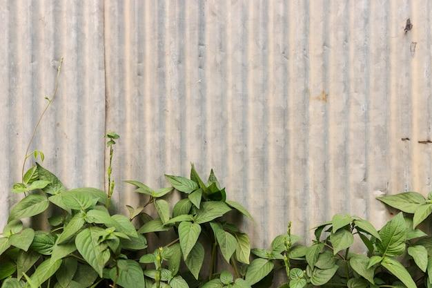 Galvanisé avec plante verte