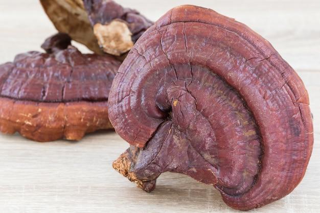 Ganoderma lucidum champignon sur fond de bois
