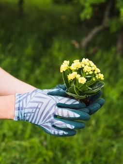 Gants portant des plantes succulentes à la main