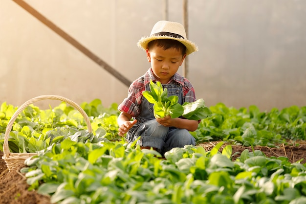Un garçon asiatique cueille des légumes d'une parcelle dans une maison biologique.