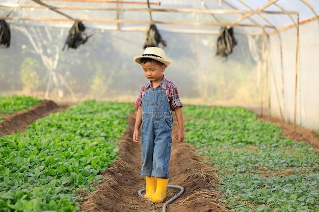Un garçon asiatique se promène en regardant des parcelles de melon dans une maison biologique.