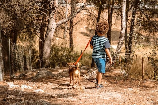 Garçon et chiot marchant dans la forêt menant le chien en laisse vu de derrière par une journée ensoleillée